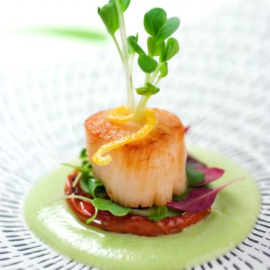Sea Scallop